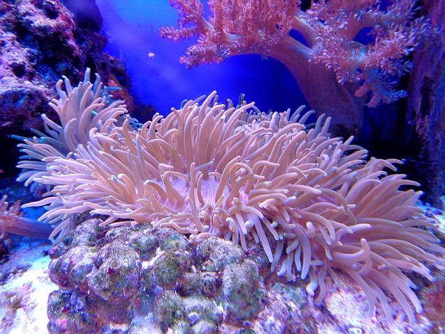 環境・サンゴ礁